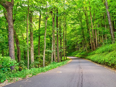 Empty pave road through tree lined forest along the Roaring Fork Motor Nature Trail