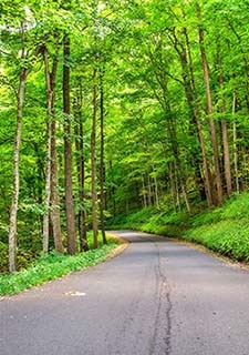 Vertical view of the paved Roaring Fork Motor Nature Trail winding through thick, green Smoky Mountains forest