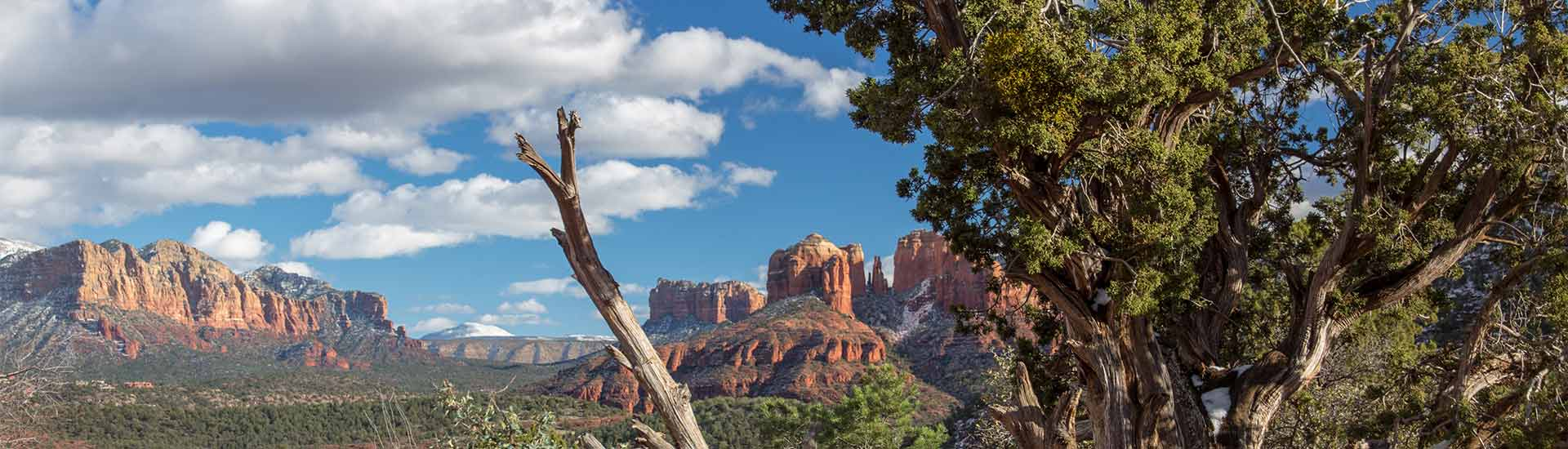 View of Sedona Cathedral Rock through mesquite tree from Upper Red Rock Loop road